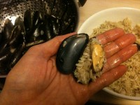 7. Open the mussels and stuff rice and cover.